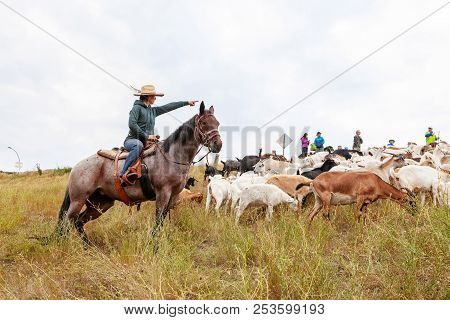 Calgary, Canada - Aug 12, 2018: A Rancher Shepherding Goats In An Effort To Eat Up Weeds In A Calgar
