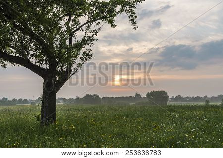 Idyllic Summer Landscape With A Big Tree In The Middle Of A Meadow With Wild Flowers, In The Country