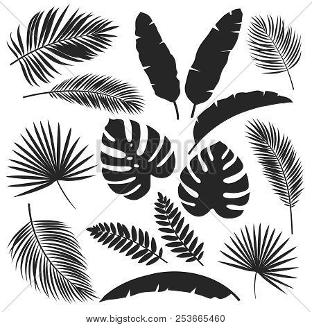 Set Vector Silhouettes Tropical Leaves. Monochrome Jungle Exotic Leaf Philodendron, Areca Palm, Roya