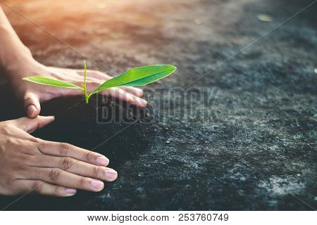 Planting Forests To Reduce Global Warming, Concept Afforest.
