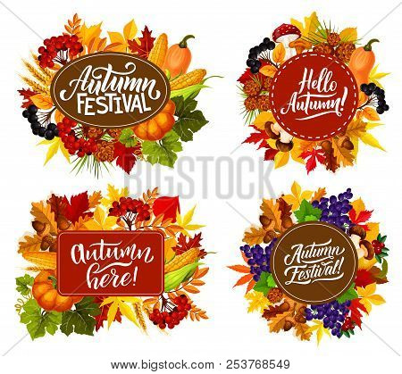 Fall Fest Or Autumn Festival Posters With Seasonal Holiday Quotes. Vector Pumpkin And Corn Harvest W