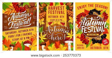 Autumn Harvest Festival Banners. Fall Season Leaf And Mushroom With Viburnum And Cone, Acorn And Blu