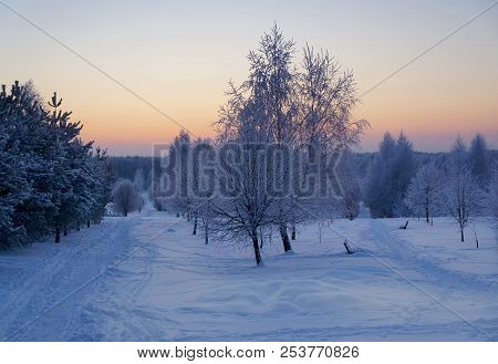 Winter Nature, Snow And Snowy Trees  On Sunrise