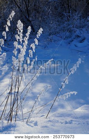 Winter Nature, Snow And Snowy Plant  In Forest