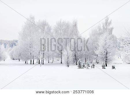 Winter Nature, Snow And Snowy Trees  In Forest
