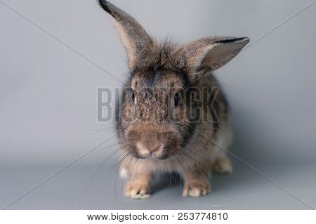 Incredulous Little Baby Bunny Rabbit Looking At The Camera. Adorable And Smart Face.