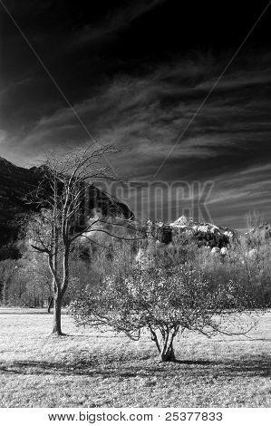 trees at mountain in infrared b