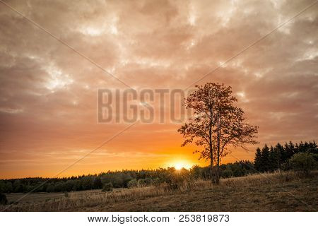 Tree Silhouette In The Sunrise On A Golden Sky Over Land With Fields And Trees
