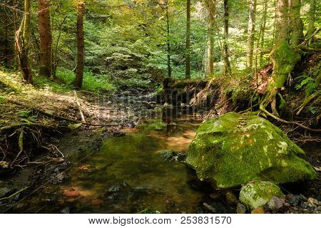 Rainforest River Nature Landscape. Stream In Rainforest Nature. Rainforest Stream. Nature. Stream. N