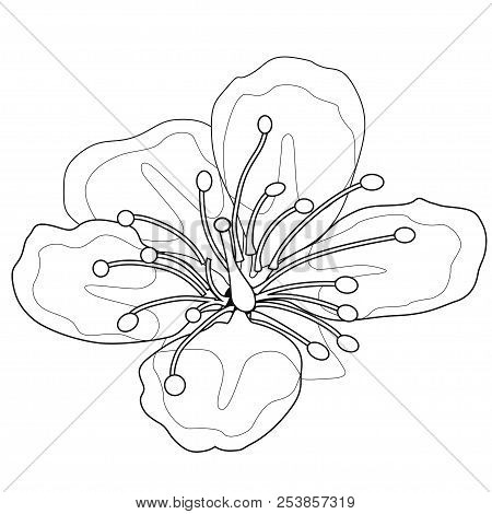 Cherry Blossoms. Coloring Book. Stock Illustration. Isolated Image On White Background.