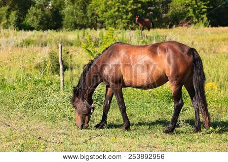 Adult horse on a pasture