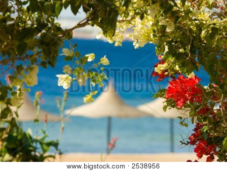 Flowers And Tropcal Beach