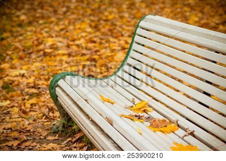 White Bench In The Autumn Park.bench In Autumn Landscape, City Park With Orange Maple Leaves On The