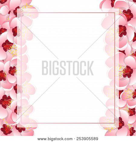 Momo Peach Flower Blossom Banner Card Border. Vector Illustration.