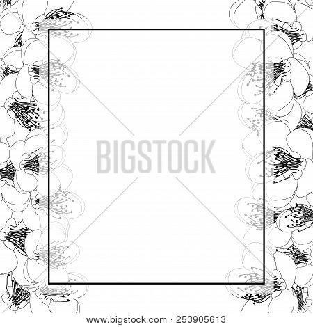 Momo Peach Flower Blossom Banner Card Border Outline. Vector Illustration.
