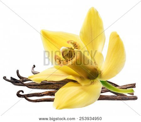 Dried vanilla fruits and orchid vanilla flower isolated on white background. Clipping path.