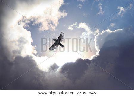 Ängel fågel i himlen