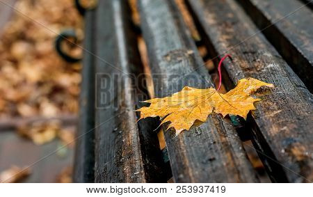 Wet Yellow Maple Leaf On A Bench In The Park. A Rainy Autumn Day Creates A Sad Mood
