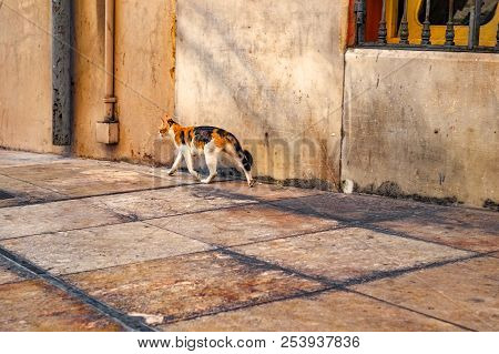 A Vagabond Cat On The Street Of Malaga City, Spain