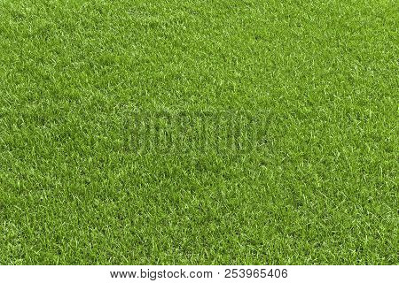Green Grass Field, Green Lawn. Green Grass For Golf Course, Soccer, Football, Sport. Green Turf Gras
