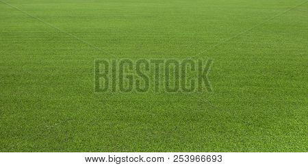 Green Grass Field For Golf Course, Soccer, Football, Sport. Green Grass, Green Lawn.  Green Turf Gra