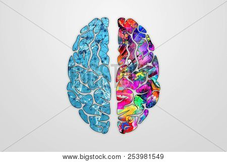 Illustration Of A Human Brain, Top View. Different Halves Of The Human Brain. The Concept Of The Hem