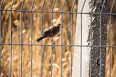 single cute sparrow isolated animal bird fly avian poster