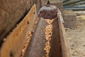The trough for grain for hens. Homemade. For food to hens. Outdoor. Grain in the gutter. poster