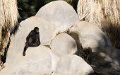 Female monkey sitting near a waterfall; Wild Life Zoo Phoenix poster