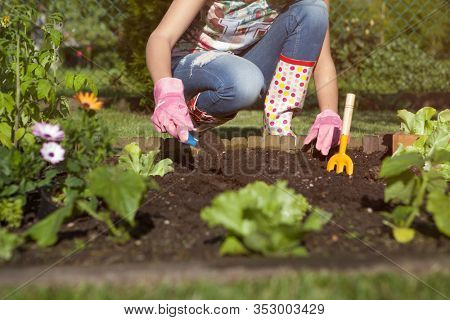 Woman wearing gloves planting lettuce, gardening concept