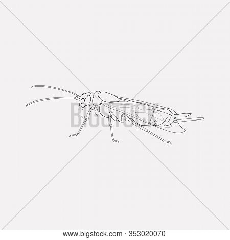 Bumblebee Icon Line Element. Vector Illustration Of Bumblebee Icon Line Isolated On Clean Background