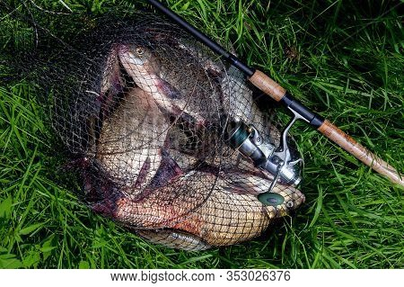 Keepnet With Big Freshwater Common Breams Fish And Fishing Rod With Reel On Natural Background..
