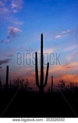 Sunset and Saguaro cactus in Saguaro national park