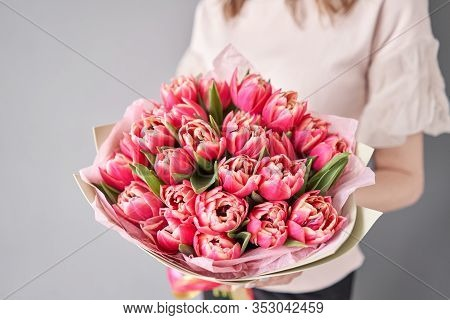 Crimson Color Tulips In Woman Hand. Spring Bouquet Of Red Tulips In Hands. Bunch Of Fresh Cut Spring