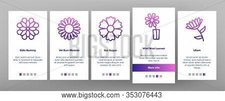 Chrysanthemum Flower Onboarding Icons Set Vector. Flowering Chrysanthemum, Blooming Daisy Marguerite