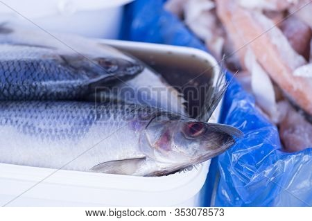 Herring In Brine With In A White Rectangular Container On The Counter. Background