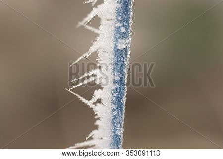 Morning Frost. Rime On A Rope Close-up.