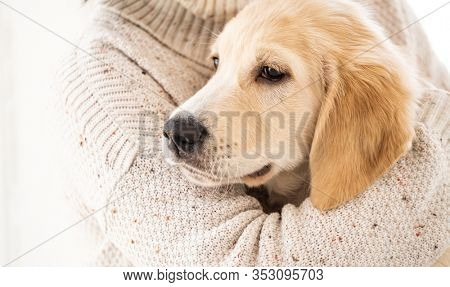 Female hand hugging calm golden retriever dog