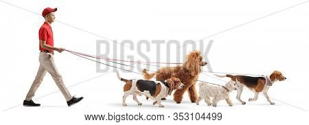 Full length profile shot of a young male dog walker walking dogs isolated on white background