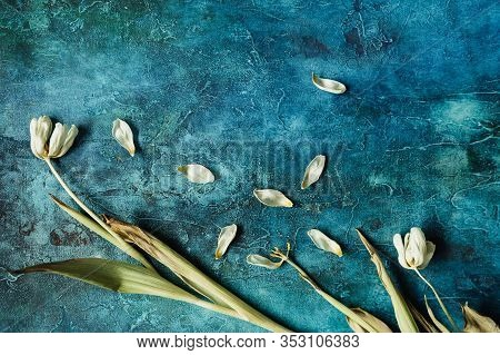 Withered White Tulips On A Bright Background, Wilted Flowers, Free Space For An Inscription