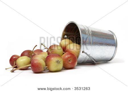 Spilled Apples
