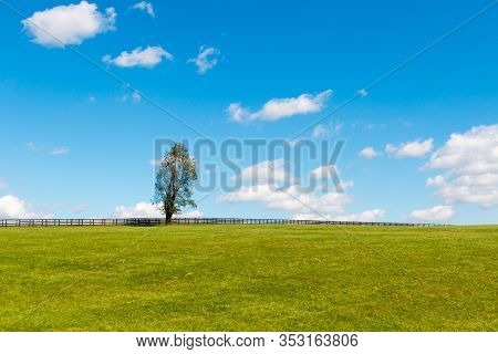 Alone Tree On Green Pastures Of Horse Farms. Country Landscape.