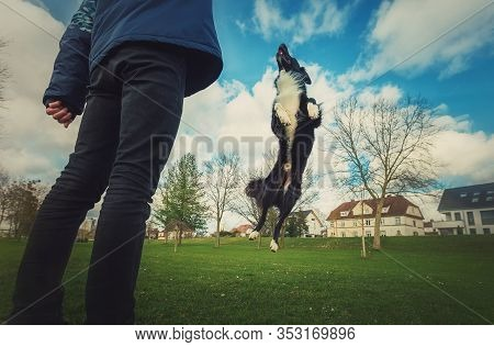 Master Training His Obedient Dog Outdoors In The Park. Well Trained Healthy Border Collie Pup Jumpin
