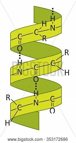 Illustration Of The Alpha Helix (α-helix) As A Common Motif In The Secondary Structure Of Proteins.
