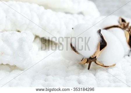 Delicate White Cotton Flowers Close Up On White Knitted Fabric.