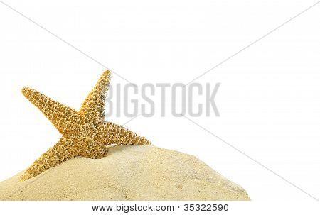 Single Starfish On A Sand Hill