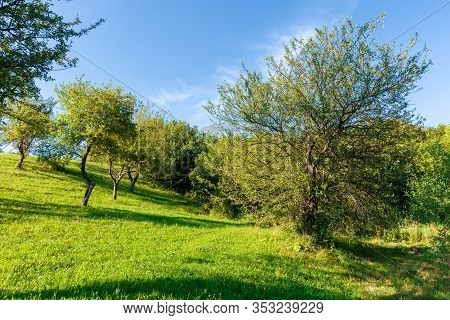 Apple Orchard On The Hill In Evening Light. Wonderful Agricultural Countryside Scenery In Summer. Gr