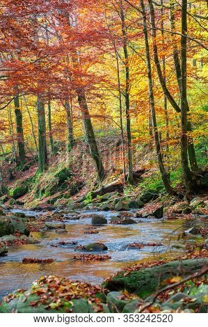 Forest River In Autumn. Rapid Water Flow Among The Trees And Mossy Rocks On A Sunny Day. Foliage In