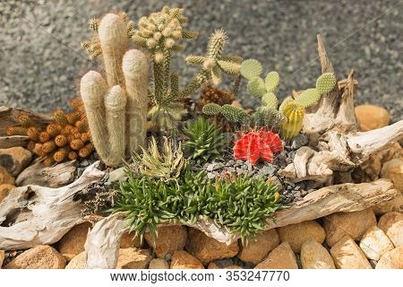 Miniature Succulents And Cacti Plants Garden In The Snag.