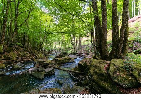 Water Stream In The Beech Forest. Stunning Nature Scenery In Spring, Trees In Fresh Green Foliage. M